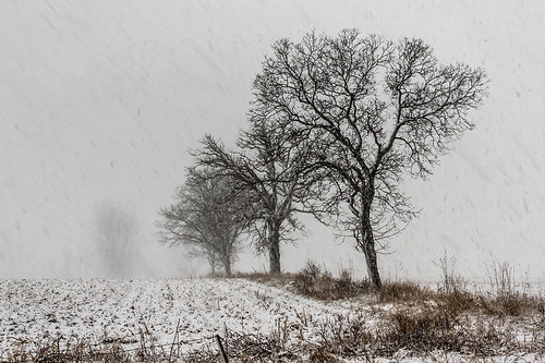Blizzard on the farm