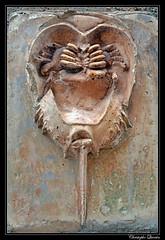 Trilobite sur le mur du collège Diderot