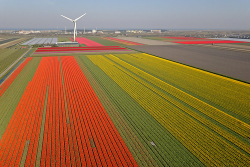 Tulip fields close to a nuclear plant