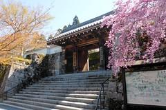 Sanzen-in, Goten-mon (Gate) -1 (April 2019)