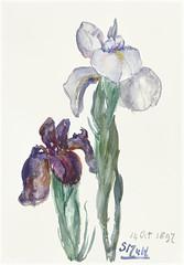 Painting by Sientje Mesdag-van Houten