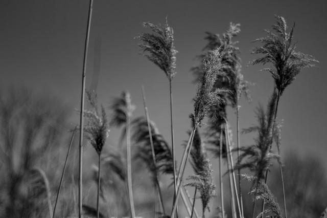 the high tall grass