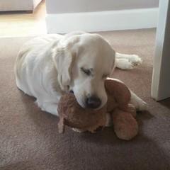 I love my Teddy so much.