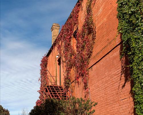 Brick wall, Molong, NSW
