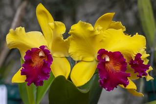 XXI Exposición Nacional de Orquídeas