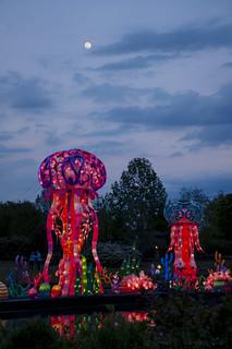 Jellyfish Rising th Meet the Moon