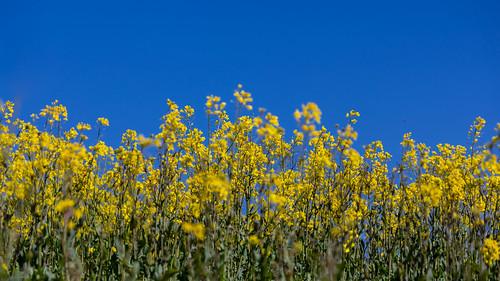 bloom basis
