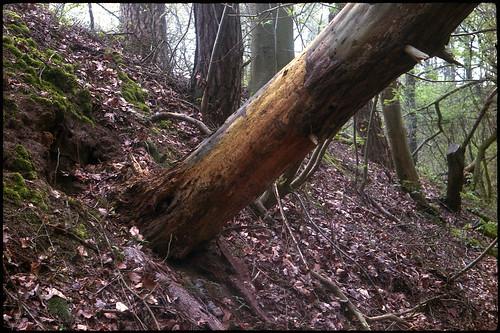 Tronc d'arbre mort dans un sous-bois