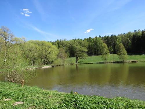 Teich bei Elgersburg