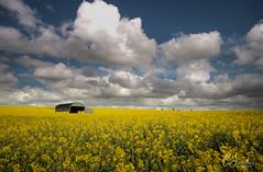 Dorset - rural