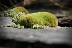 Moss on walls at Evol