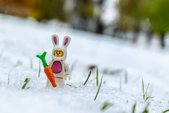 Easter bunny lost in winter