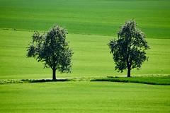 Variation de vert - Photo of Beauchery-Saint-Martin
