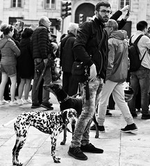 25 de Abril 2019 - Yes a lot of dogs also participate in the demonstration