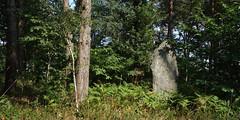 Le champ de menhirs de Sévéroué à Saint-Just - Ille-et-Vilaine - Août 2018 - 01 - Photo of Bruc-sur-Aff
