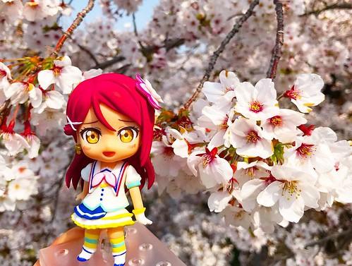 yamazaki river cherry blossom