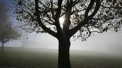 Sunlight Fog