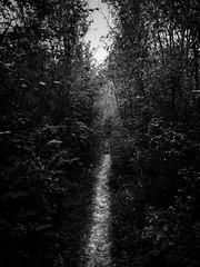 Sur le chemin - Photo of Herbeville