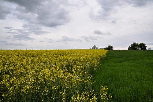La campagne verte et jaune