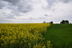 La campagne verte et jaune - Photo of Ohlungen