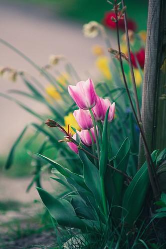 Street Flower Bokeh   24. April 2019   Tarbek - Schleswig-Holstein - Deutschland
