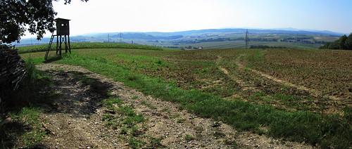 20110822 06 066 Jakobus Feld Wald Weite_P01