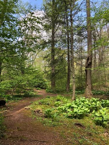 Willowwood Arboretum, Far Hills, NJ