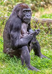 Washington DC April 22 2019 Smithsonian National Zoological Park-27