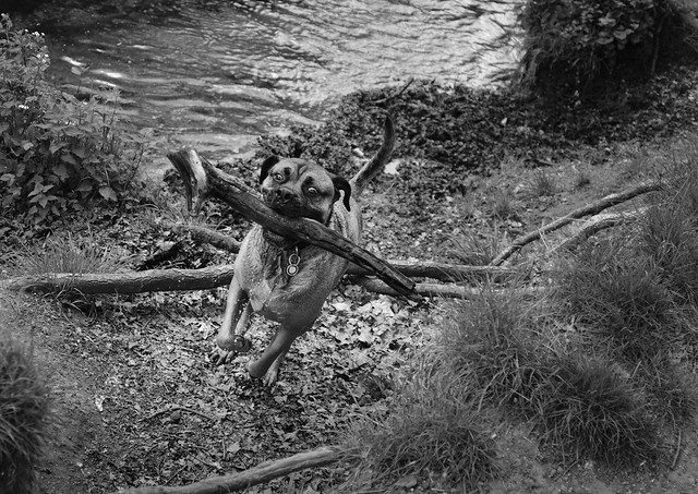 Elmo at Beverley Brook in Richmond Park