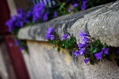 Street Spring