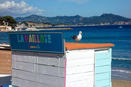 La Ciotat beach / La paillotte et le goéland / The hut and seagull