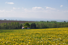 Campagne fleurie - Photo of Adamswiller