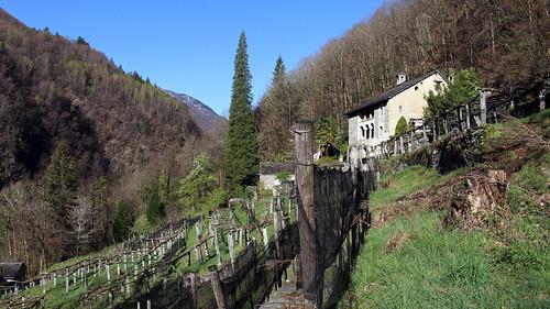Weinanbau im Weiler Niva unterhalb von Loco