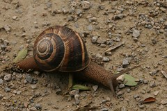 Escargot - Photo of Saint-Quentin-la-Tour