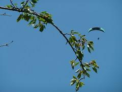 17/06)2012 dans le ciel de Herran 31160 - Photo of Herran