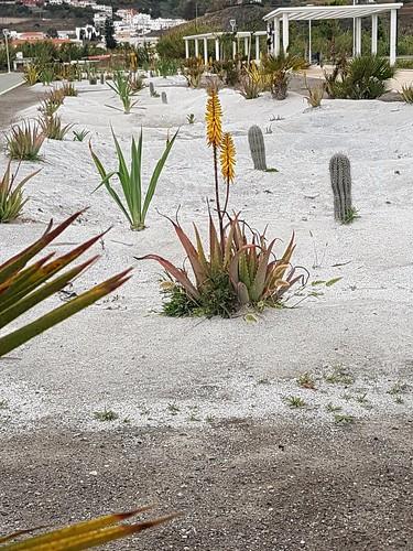 Desert garden by the playa