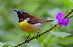 PR Sunbird