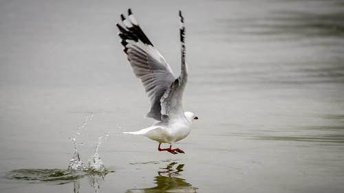 Splashy takeoff
