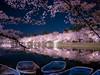 Photo:弘前公園 西濠ボート乗り場 (Hirosaki Park | Aomori, Japan) By kzy619