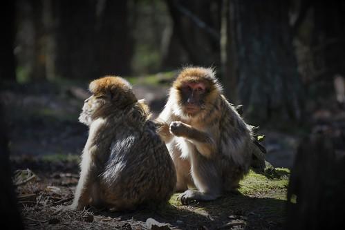 Montagne des singes D500 (10)