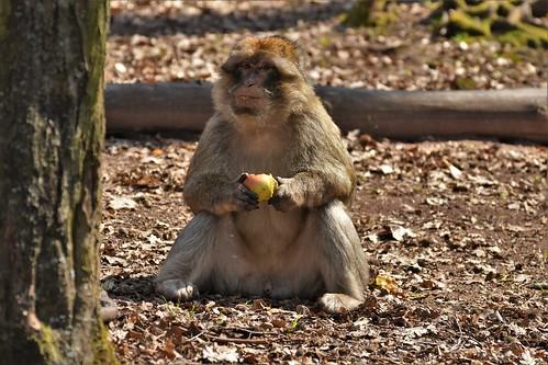 Montagne des singes D500 (124) 2