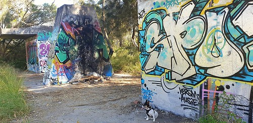 Shanti on another bushwalk on Belmont Lagoon and discovered some graffiti on an old site