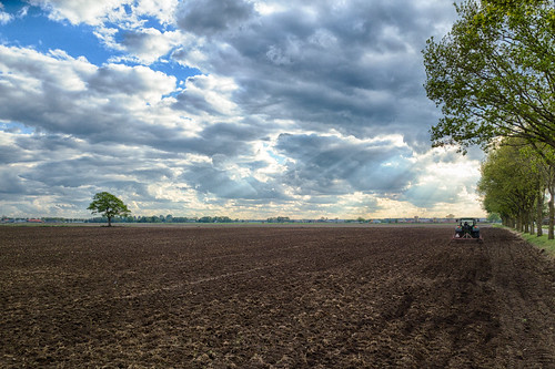 Agri Lonely Tree