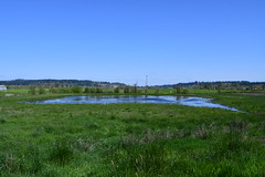 Dave Budeau's Wetland Reserve Easement - Marion County, Oregon