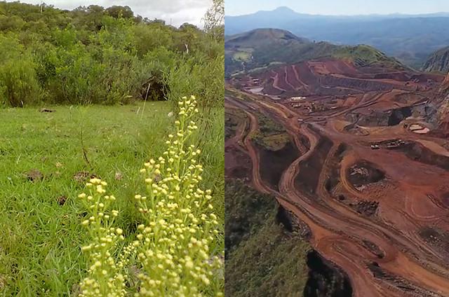 Sociobiodiversidade gaúcha está ameaçada de destruição com os mais de 150 projetos em andamento no Estado - Créditos: Fotomontagem: Divulgação