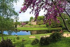 Montaigu le parc du chateau 00001