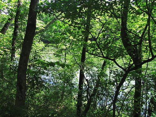 20110831 15 209 Jakobus Wald Traun Fluß