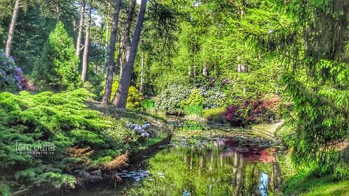 Heather garden, Driebergen-Rijsenburg, Netherlands - 1464
