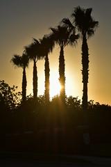 Sunrise/Morning Golden Hour