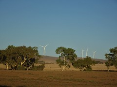Hummocks Station beside the Hummock Ranges. This estate was taken up in 1842. Just beyond the paddocks is the Snowtown Barunga Gap wind farm for electricity generation.